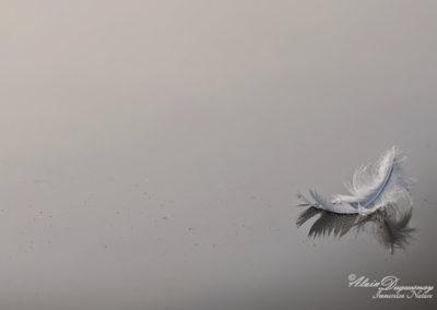 ©AD-DR-AFF-2015-plume-sur-le-lac-5830