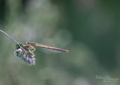 Regards d'insectes et de proximité