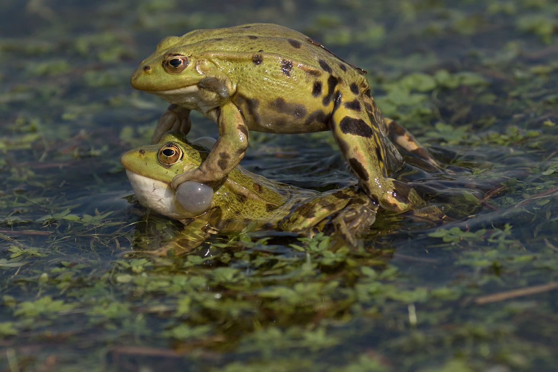 amphibiens01